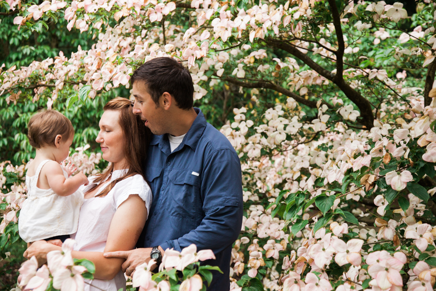 lacey monroe photography, dogwood tree in bloom, parents with baby, family photo