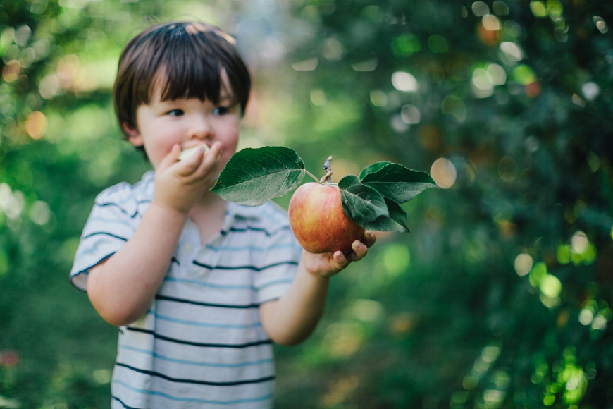 apple picking, child photography, hood river, oregon, child holding apple